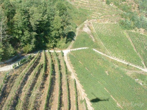 Vue d'en haut des vignes